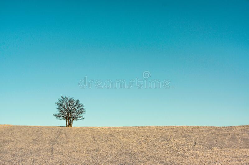 A single tree in a snowfield in winter at dusk. The blue sky offers a large and solid copy space stock photos