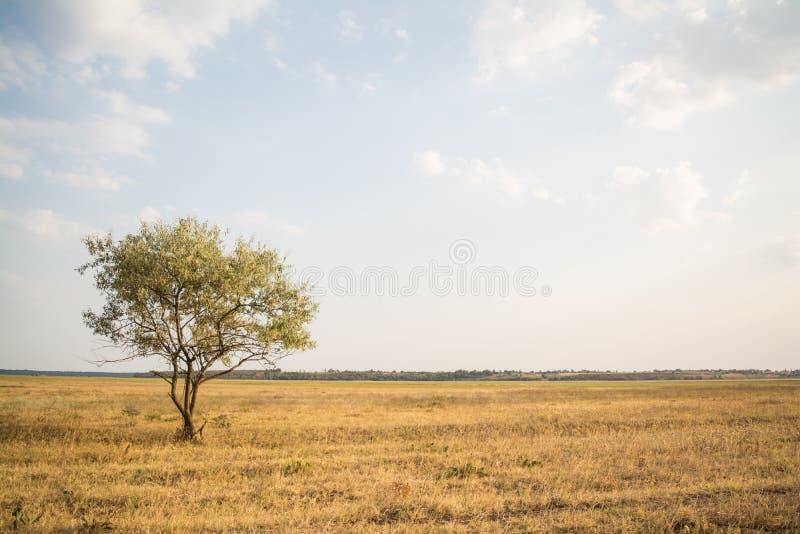 Single tree in summer field landscape stock photos