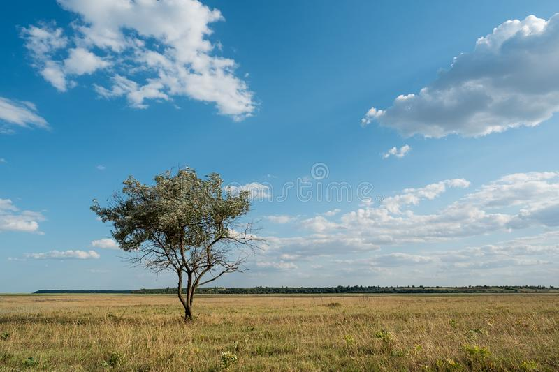 Single tree in summer green grass field landscape clouds blue sky stock photography