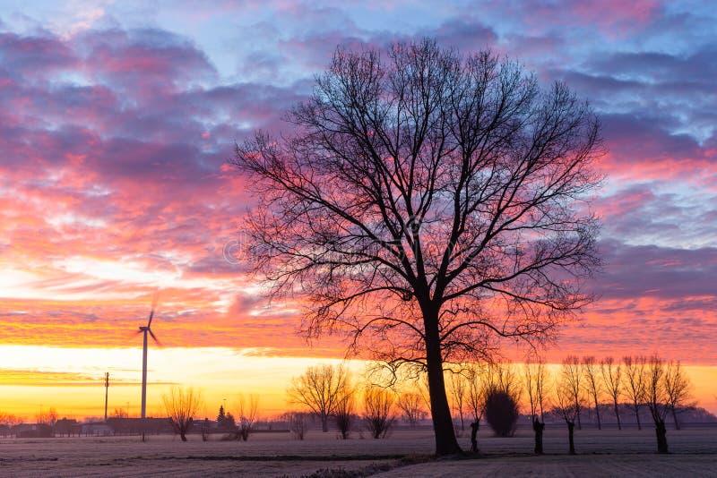 Single tree at sunrise iin winter stock image