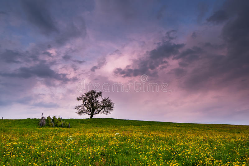 Download Single tree on sunset stock image. Image of dusk, single - 27121651