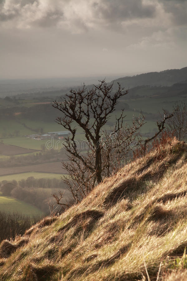 Free Single Tree, Sutton Bank Stock Photography - 17662882