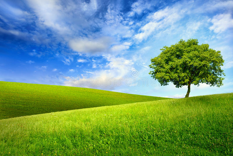 Single tree on top of a green hill stock photography