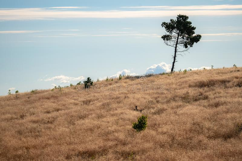 Single tree on top of the hill on a sunny day. Lonely tree on top of the mountain with clouds in the background royalty free stock photo