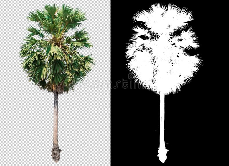 Single tree on transparent picture background with clipping path, single tree with clipping path and alpha channel on black. Background vector illustration
