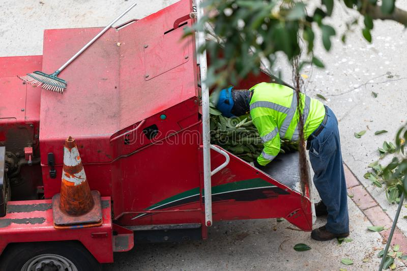 Single tree trimmer feeding wood chipper royalty free stock photography