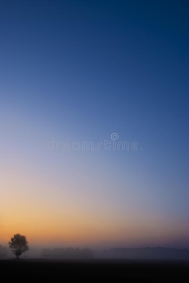 Download Single Tree With Vibrant Blue Orange Sunrise Sky Stock Photo - Image: 11229444