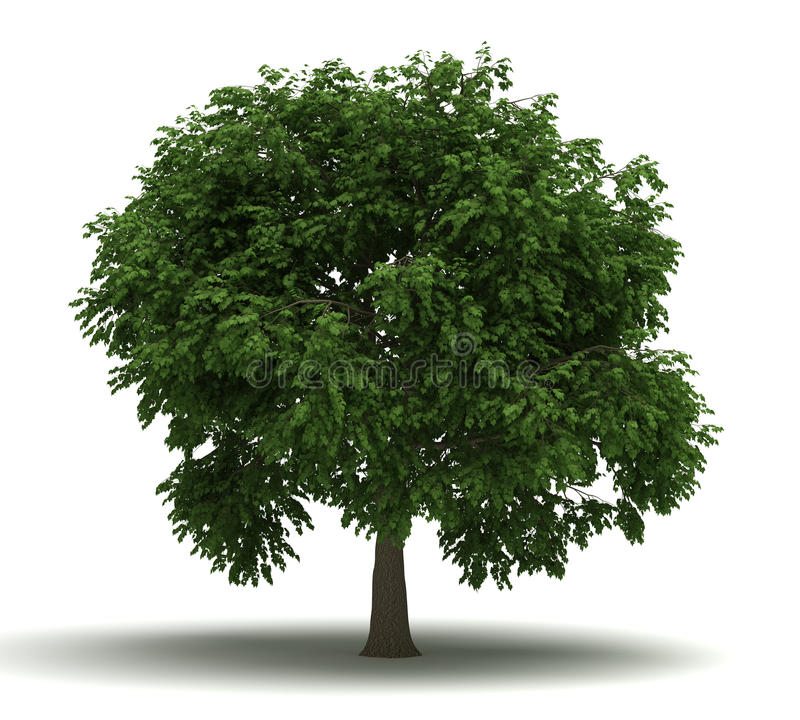 Single Tree stock images
