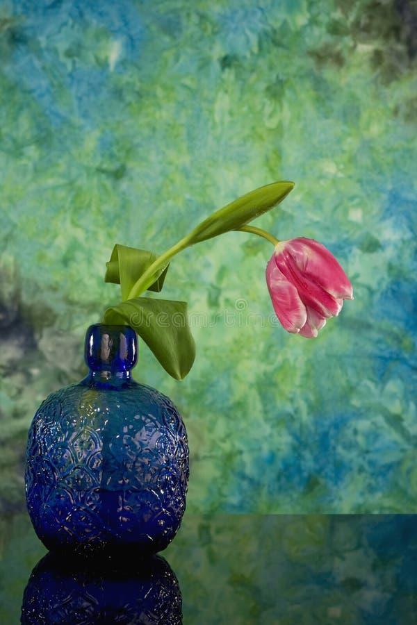 Single tulip in vintage vase royalty free stock image