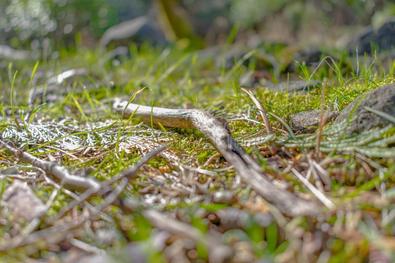 Single Twig in Spring Time royalty free stock photos