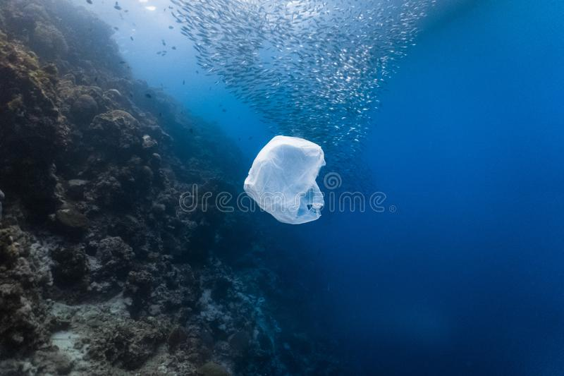 Single-use plastic and school of fish in a shallow reef royalty free stock photography