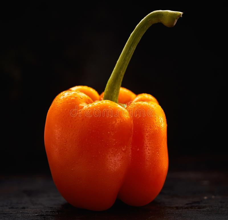 Single wet sweet pepper with long stalk. Single wet washed fresh orange sweet pepper with long green stalk viewed side on over a dark background in square format royalty free stock photo