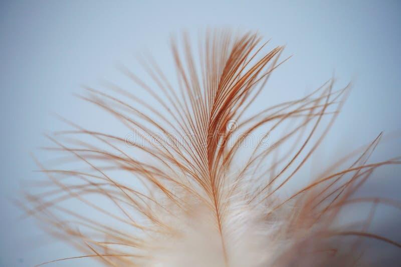 Single White Brown Feather Free Public Domain Cc0 Image