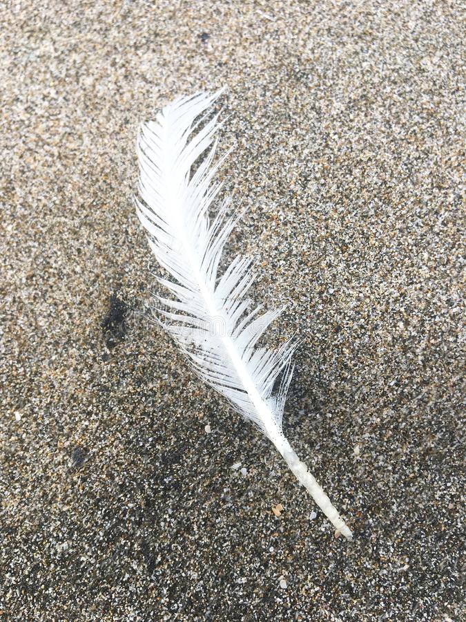 Single White Feather on the Beach. A single white bird feather lands on sand at beach royalty free stock image