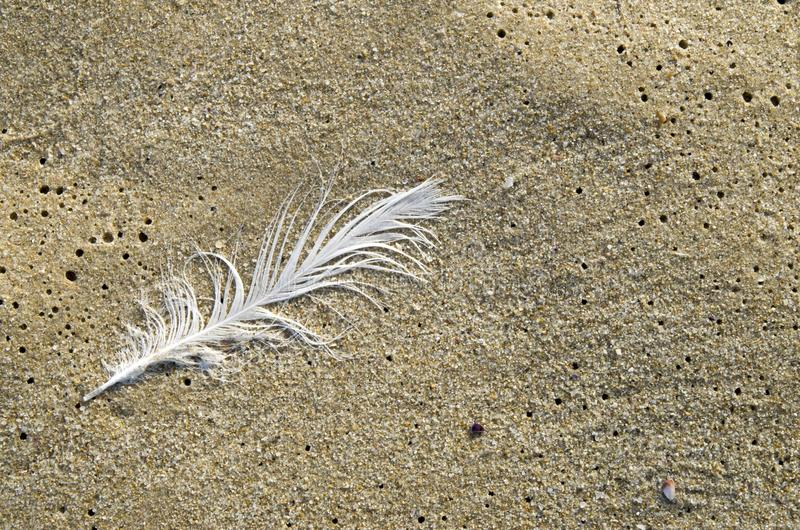 Single white feather on sandy beach. In sunny day royalty free stock images