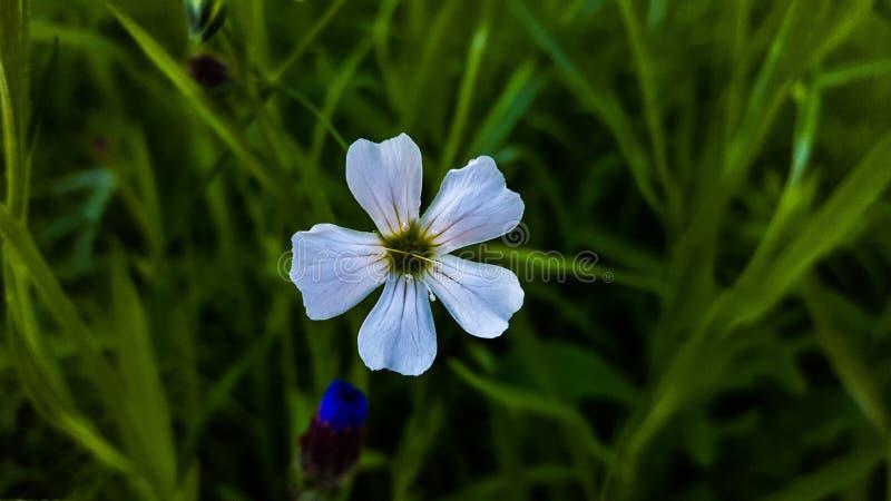 Single white flower stock image