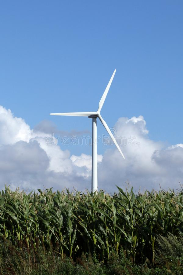 Single white wind turbine in corn field standing high royalty free stock photography