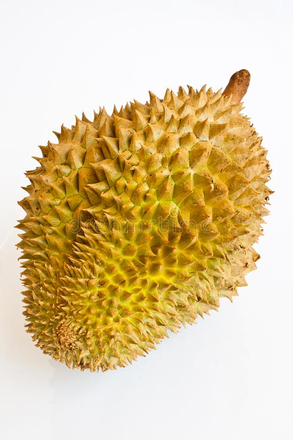 Single whole durian on white background stock image