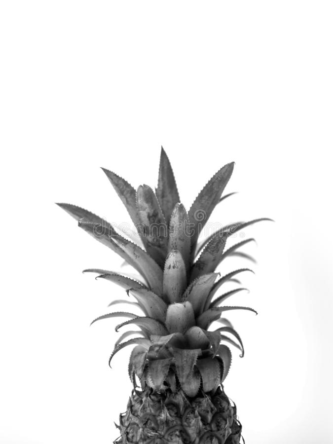 Single whole pineapple isolated on white background, black and white stock image