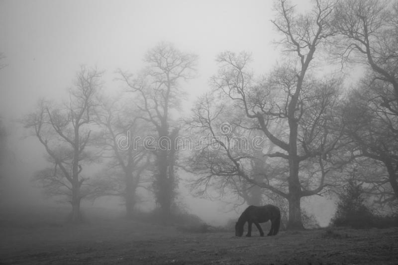 Single wild horse in a foggy landscape in the woods stock photo