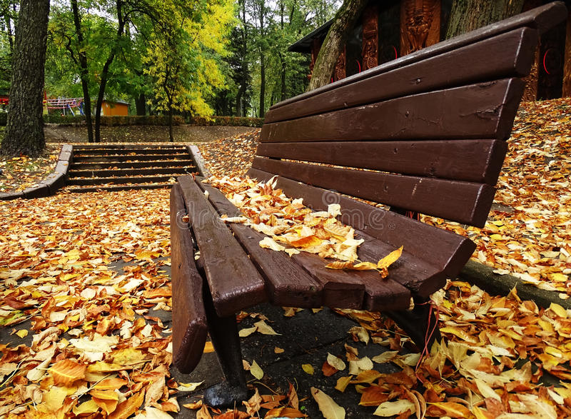 Single Wooden Bench In Autumn Park With Colorful stock image