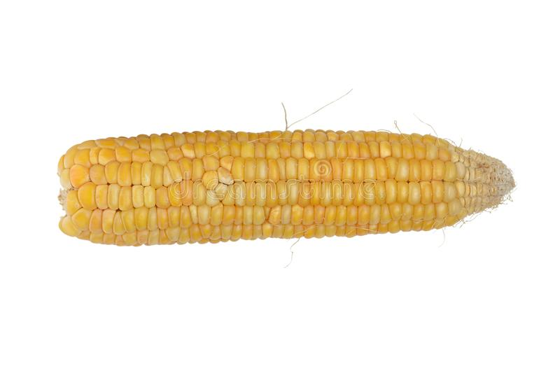 Single yellow cob of corn isolated at white royalty free stock image
