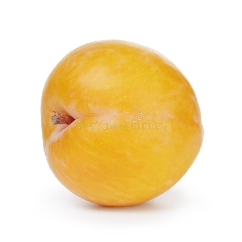 Single yellow plum royalty free stock photo