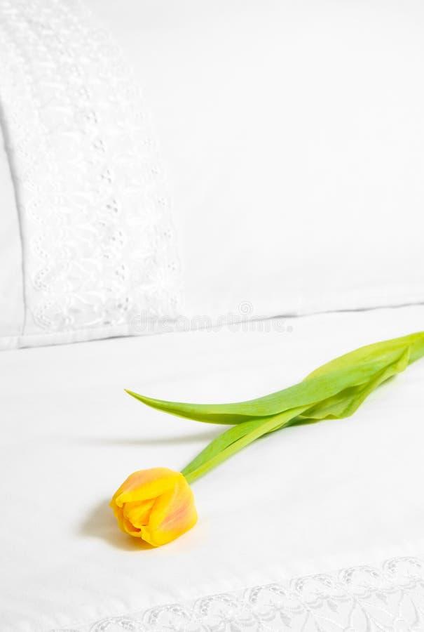Free Single Yellow Tulip Stock Images - 8107204
