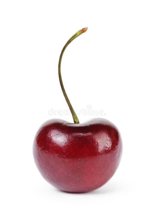 Singola bacca matura della ciliegia fotografia stock