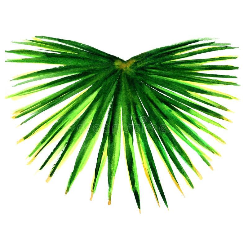 Singola foglia di palma verde isolata fotografia stock
