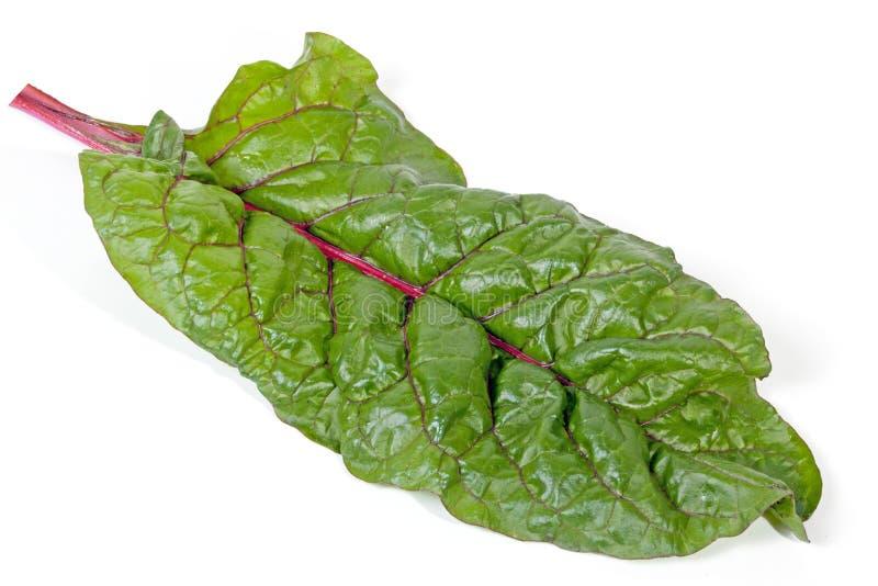 Singola foglia verde degli spinaci della bietola con il gambo rosso immagine stock libera da diritti