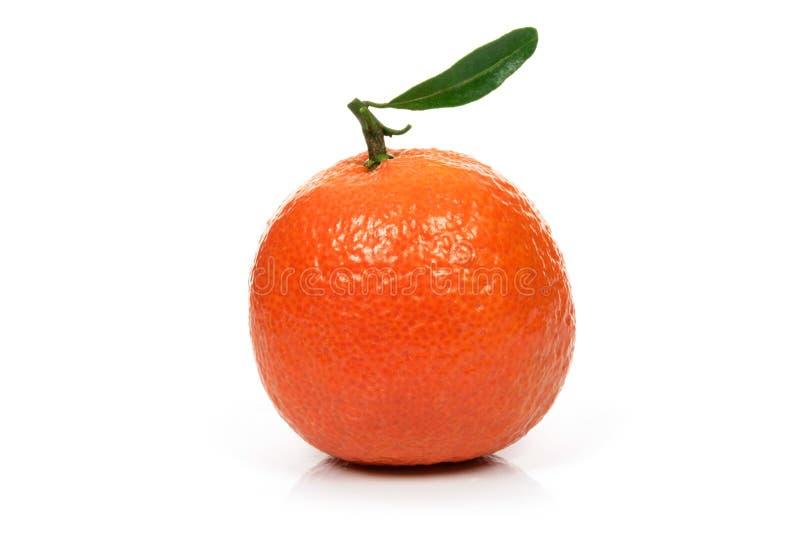 Singola frutta arancio fresca immagini stock