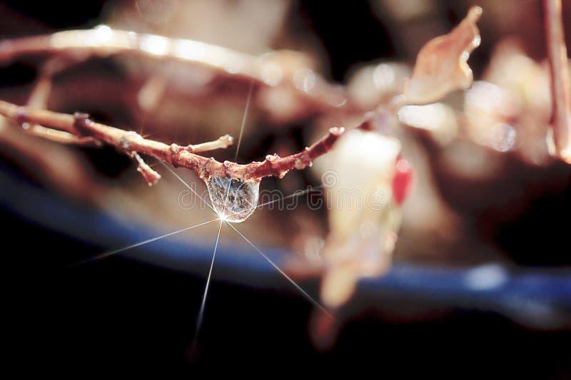 Singola goccia di pioggia con la stella sul ramo