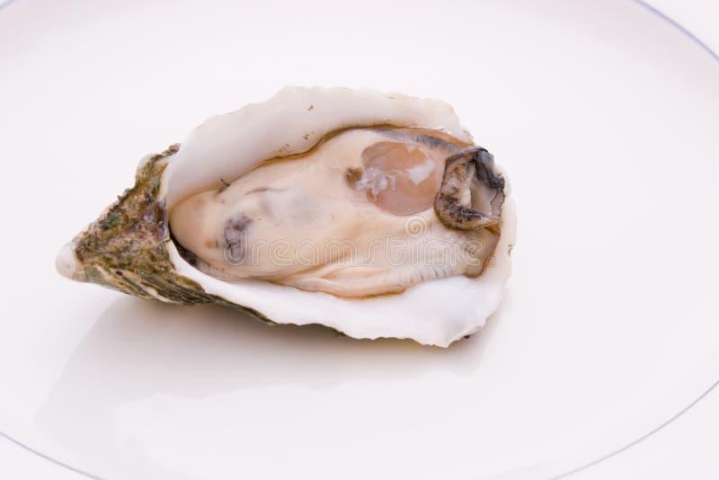 Singola ostrica fotografie stock libere da diritti