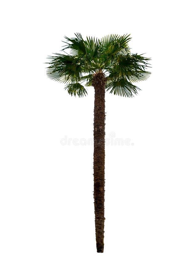 Singola palma immagine stock