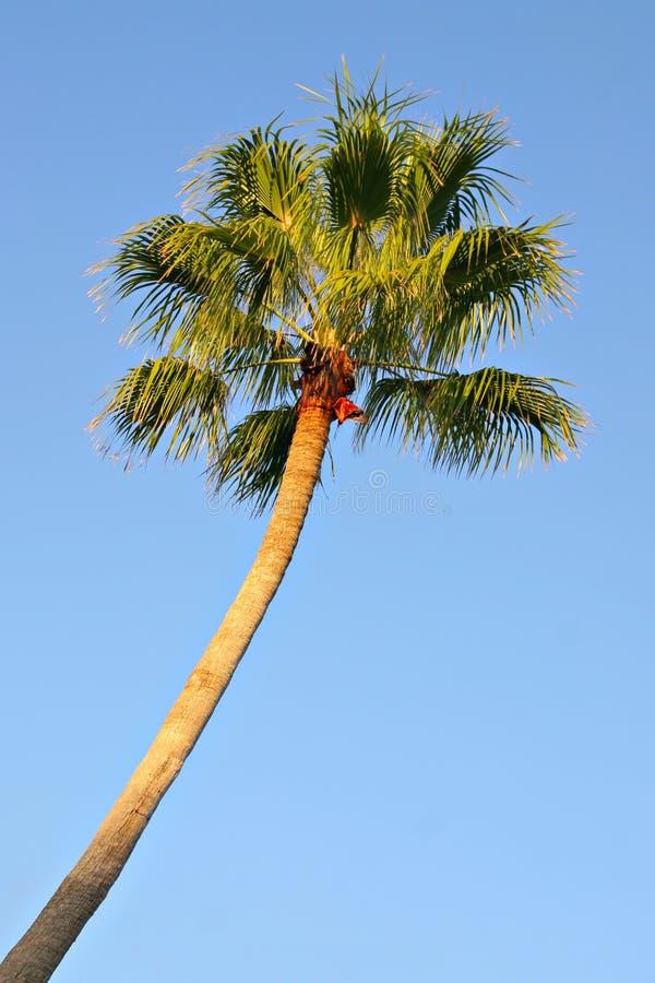 Singola palma fotografie stock