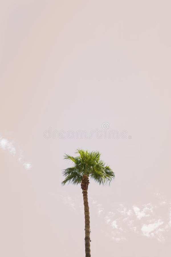 Singola palma fotografia stock
