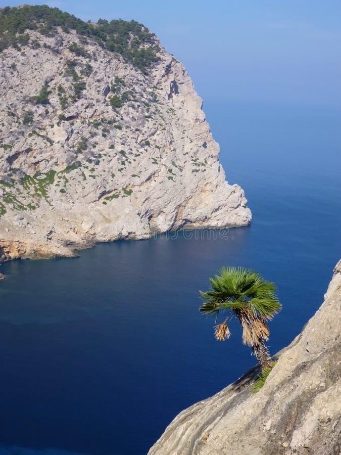 Singola palma alla scogliera sopra il mare blu profondo fotografie stock libere da diritti