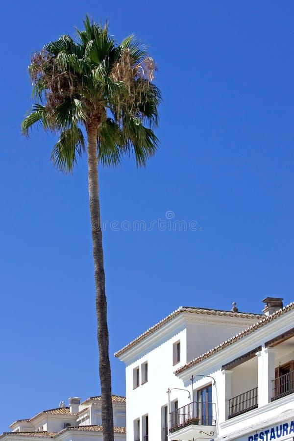 Singola Palma Alta Vicino Alle Costruzioni Nella Porta Di Duquesa In Spagna Immagini Stock