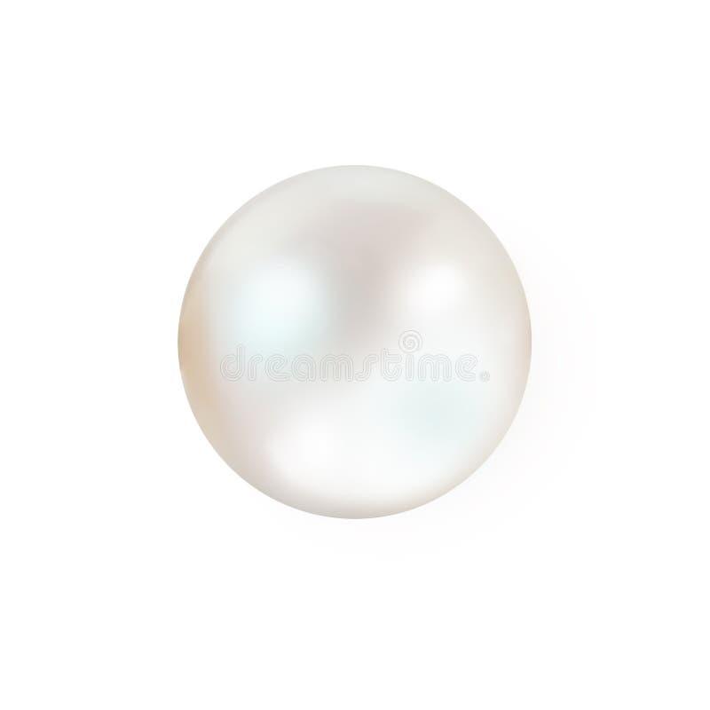Singola perla naturale bianca dell'ostrica con la madreperla della madreperla fuori fotografia stock