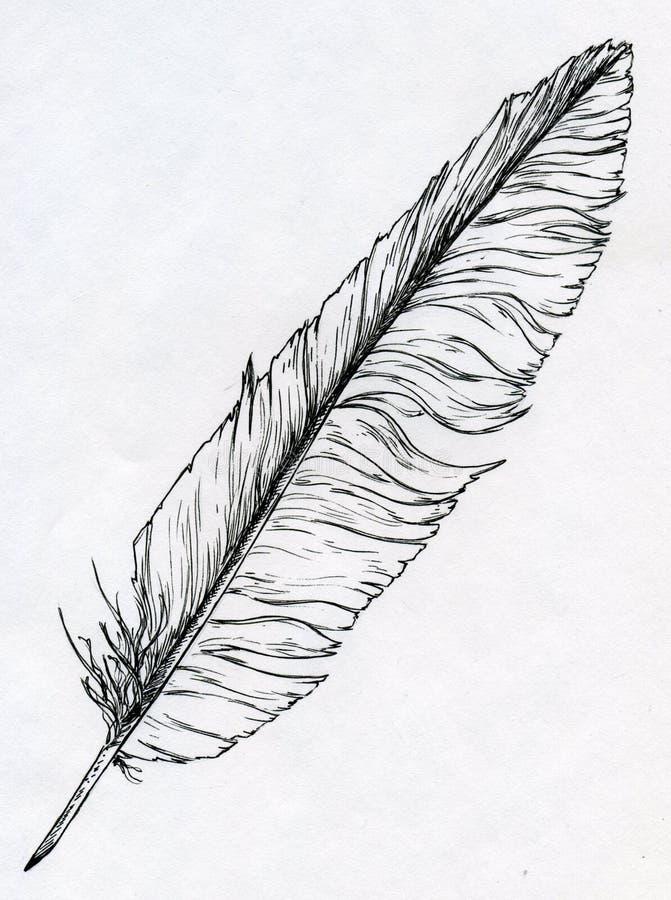 Singola piuma disegnata con inchiostro illustrazione vettoriale