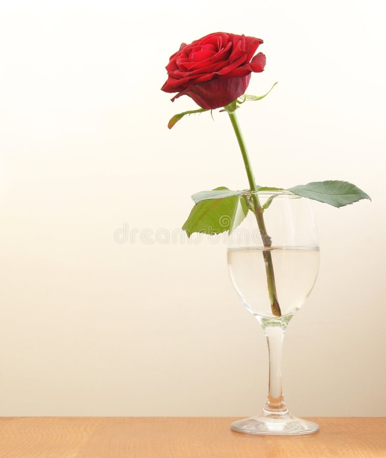Download Singola Rosa rossa immagine stock. Immagine di fogli, singolo - 3144005