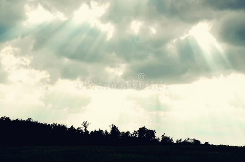 Singola siluetta minimalista dell'albero Concetto di solitudine, depressione, fuga, amicizia, supporto, cura, matrimonio immagine stock