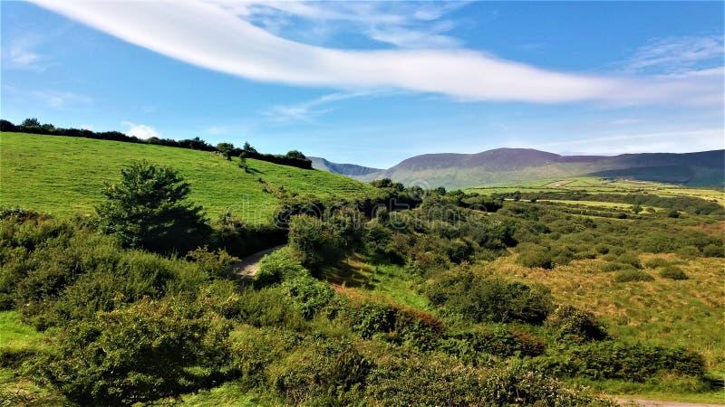 Singola strada irlandese sotto il verde fotografia stock