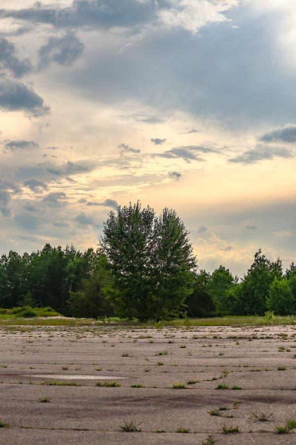 Singolo albero che cresce nella pista abbandonata dell'aeroporto fotografia stock