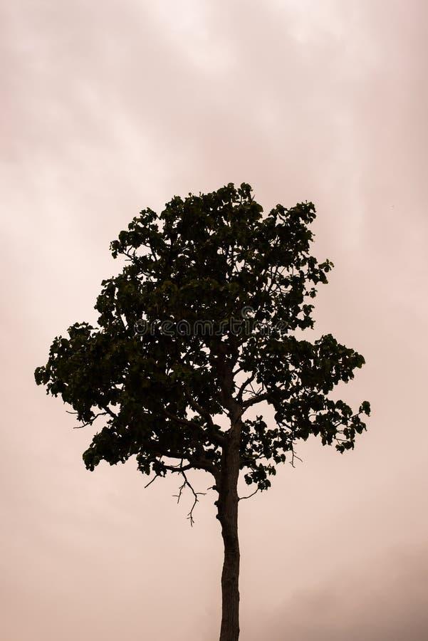 Singolo albero che si leva in piedi da solo immagine stock
