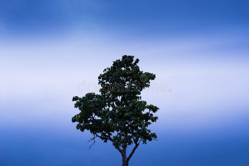 Singolo albero che si leva in piedi da solo fotografia stock libera da diritti