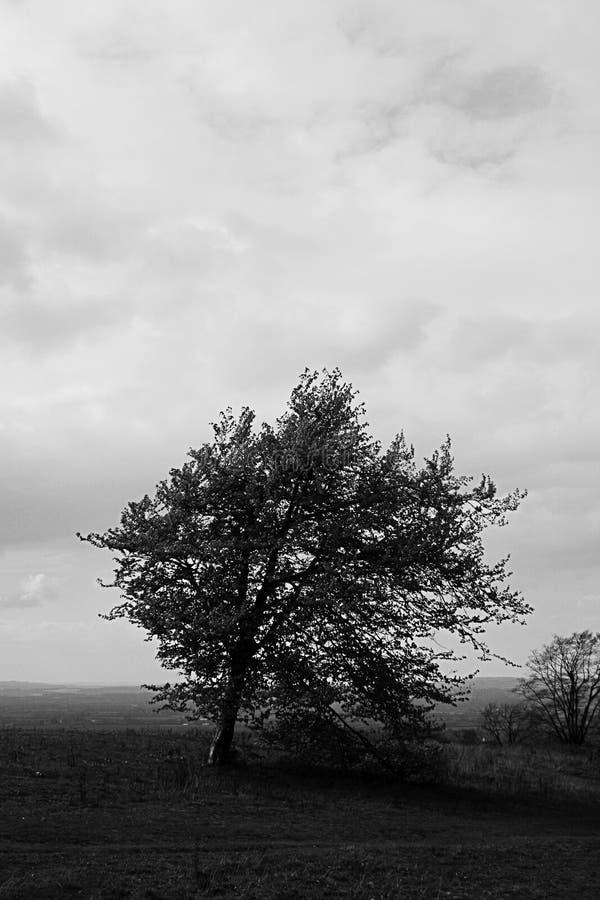 Singolo albero che sta contro il lanscape fotografia stock
