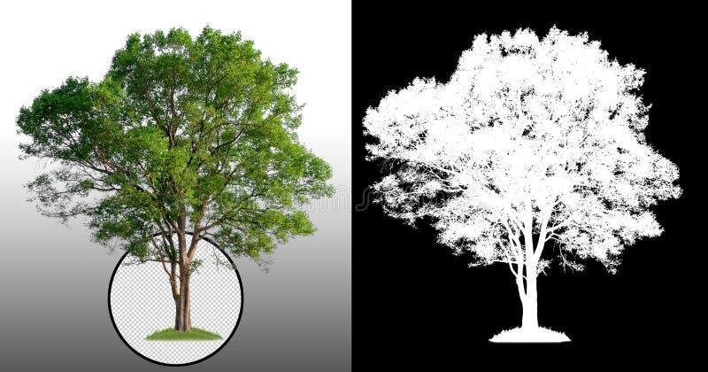 Singolo albero con il percorso di ritaglio illustrazione di stock