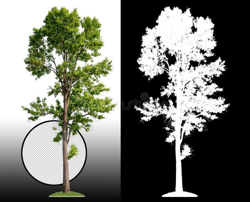 Singolo albero con il percorso di ritaglio illustrazione vettoriale
